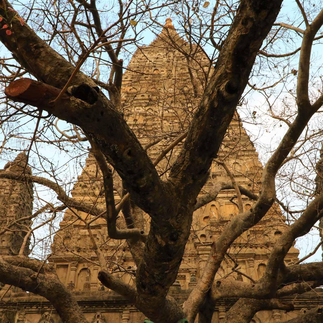 Bodhi Tree em Bodhgaya